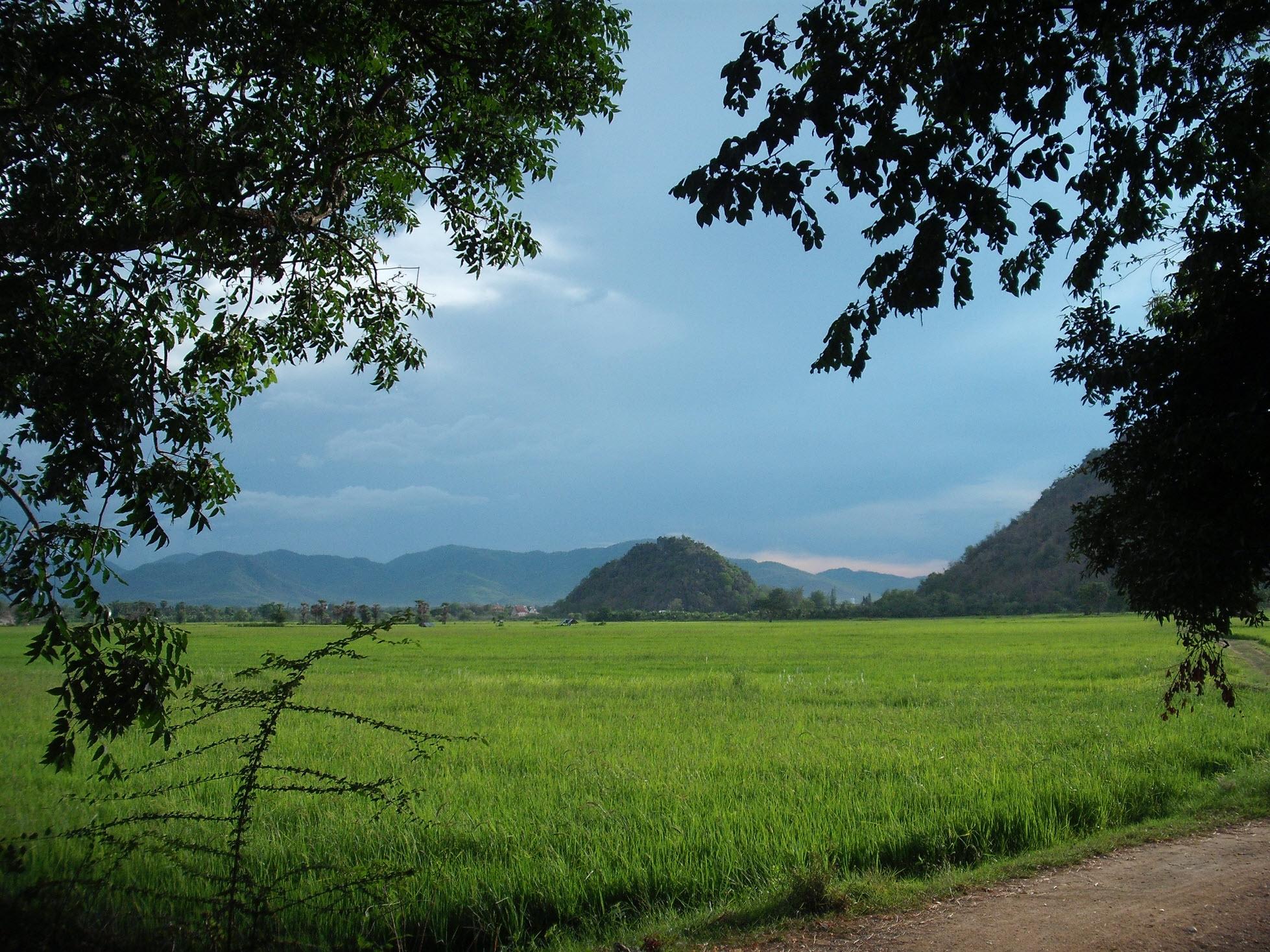 Flora & Fauna zur Regenzeit in Asien